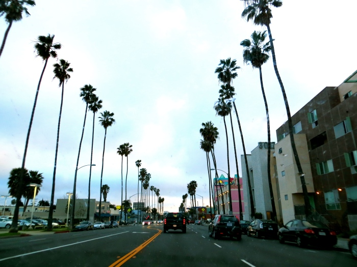 One of my favourite things about Los Angeles were the palm tree lined streets.  How do these tall, skinny trees not bend over and break?